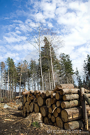 Pile of logs in deforestation area in forest