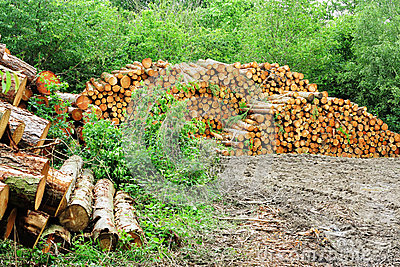 A Pile of Logs in a woodland clearing
