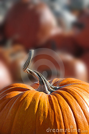 Free Pile Of Pumpkins Stock Photography - 3181092