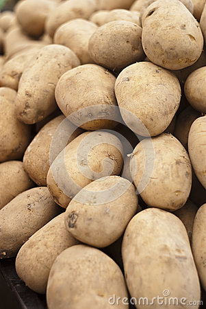 Pile of old potatoes
