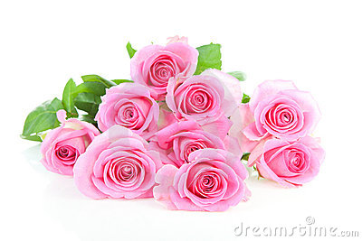 Pile of pink roses