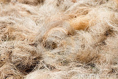 Pile of processed copra fibre