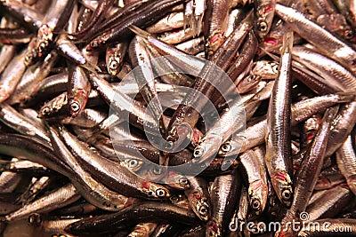 Pile of sardinas on foodmarket