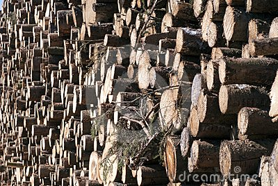 Pile of sawed spruce