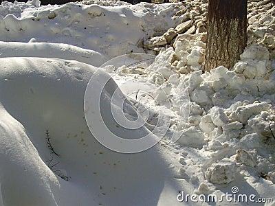 Pile of snow near the tree