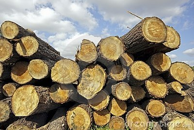 Pile of wood in the countryside from Portugal