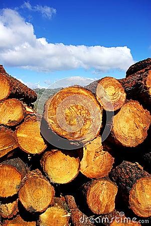 Wood trunks of pine trees