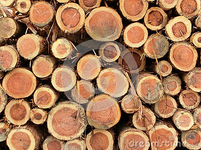 Piled logs