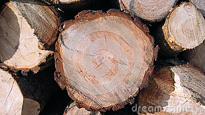 Piles of Sawn Timber