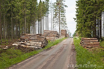 Piles of timber