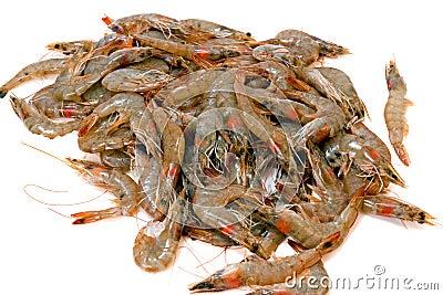 Pilha do camarão