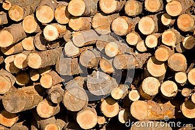 Pilha dos troncos