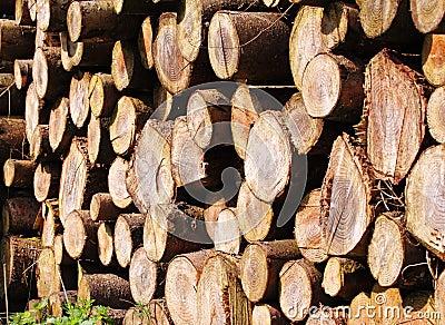 Pilhas da madeira vista