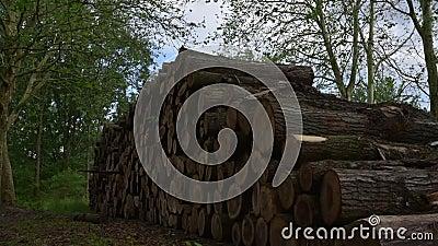 Pilhas do log Exploração das árvores da silvicultura filme
