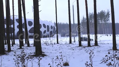 Pin dans la neige, hiver, forêt d'hiver, herbe couverte de neige banque de vidéos