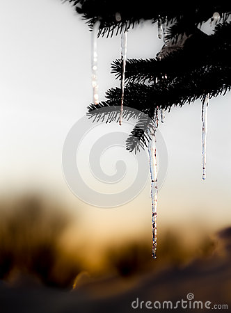 Free Pin Tree With Melting Ice Stock Image - 37521271