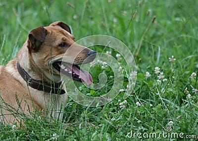Pinch Dog Head
