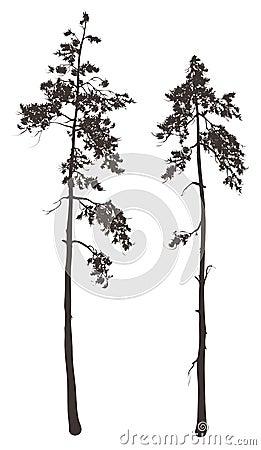 Free Pine Stock Image - 35698931