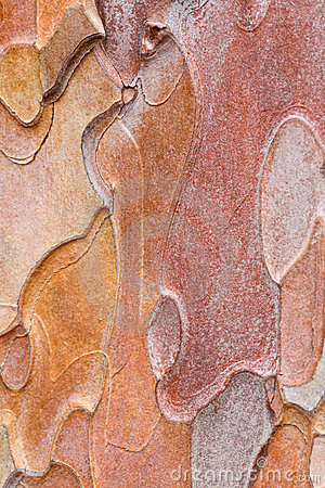 Free Pine Bark Stock Photos - 10757083
