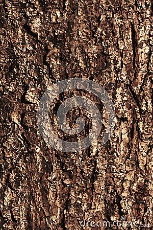 Pine bark texture pattern