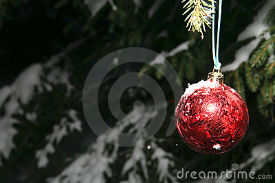 Pine and christmas ball