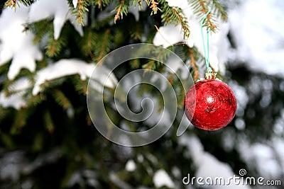 Pine and christmas ball