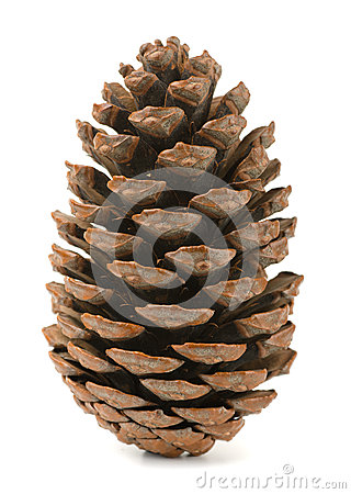 Free Pine Cone Stock Photography - 35149592
