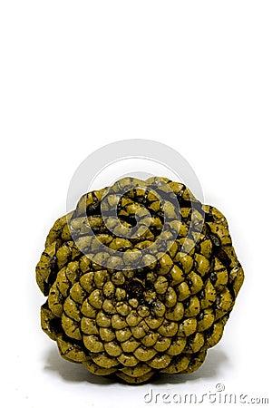 Pine cone base
