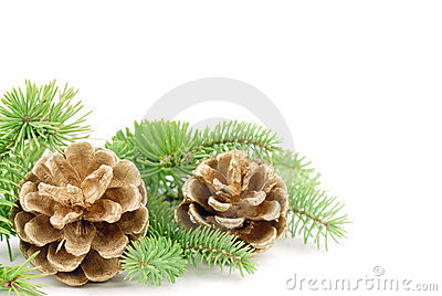Pine cone with branch