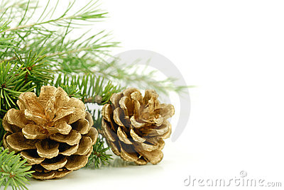 Pine cone with branch on the white background