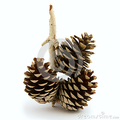 Pine cone, Christmas ornament.