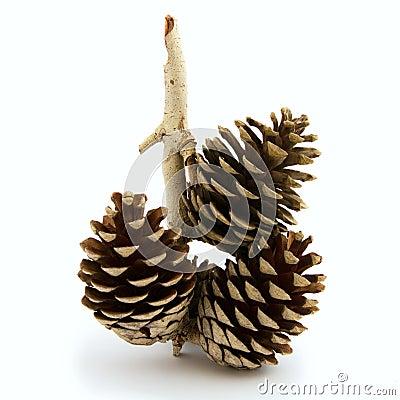 Pine cone, Christmas ornament.