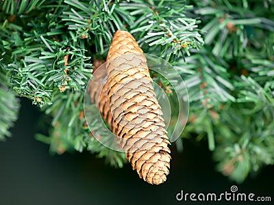 Pine cone detail hanging