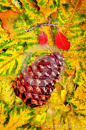 Pine Cone and Fall Leaves
