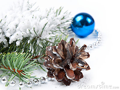 Pine cone  and fir branch