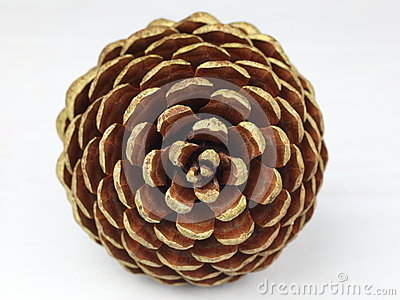 Pine cone front