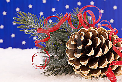 Pine cone in Snow
