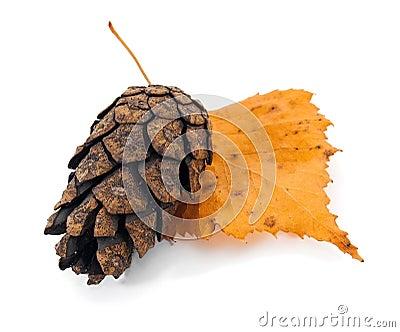 Pine cone on tree leaf