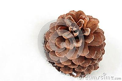 Pine cone on white snow