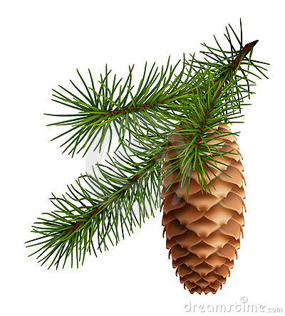 Free Pine Cone With Branch Royalty Free Stock Images - 21919209