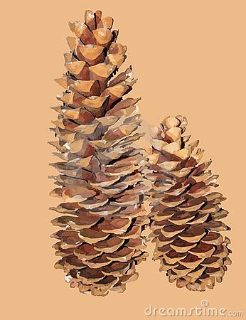 Free Pine Cones Royalty Free Stock Photography - 7093867
