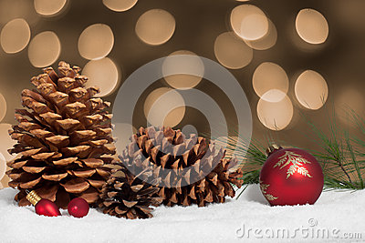 Pine cones and bough in snow