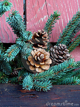 Pine cones and Christmas tree branch