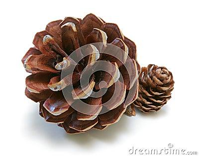Pine Cones Duo