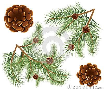 Pine cones with pine needles
