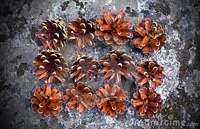 Pine cones on rock