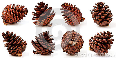 Pine cones on white background