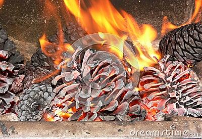 Pine in fire.