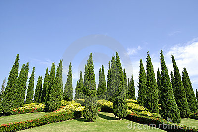 Pine garden,outdoor space