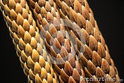 Pine Leaves Macro Photo